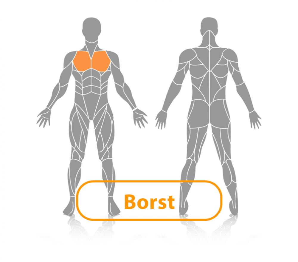 lichaam met borstpieren uitgelicht