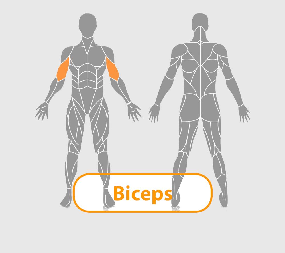 lichaam met biceps uitgelicht