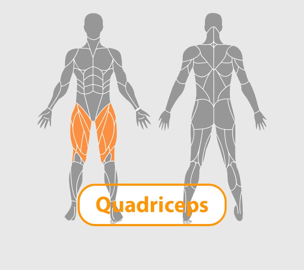 lichaam met quadriceps uitgelicht